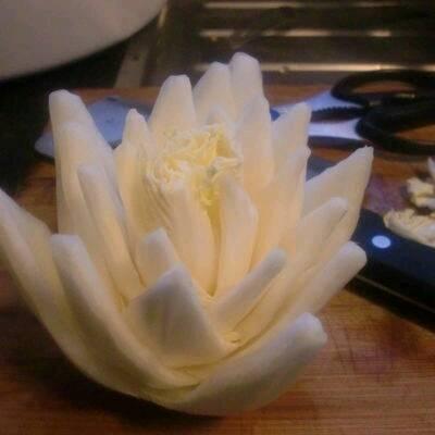 莲花根部结构图